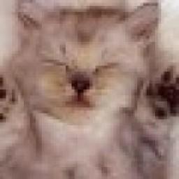 Profielfoto van pussy de luxe